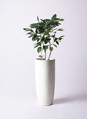 HitoHana(ひとはな) コーヒーの木8号 エコストーントールタイプwhite B07CWTL1CL