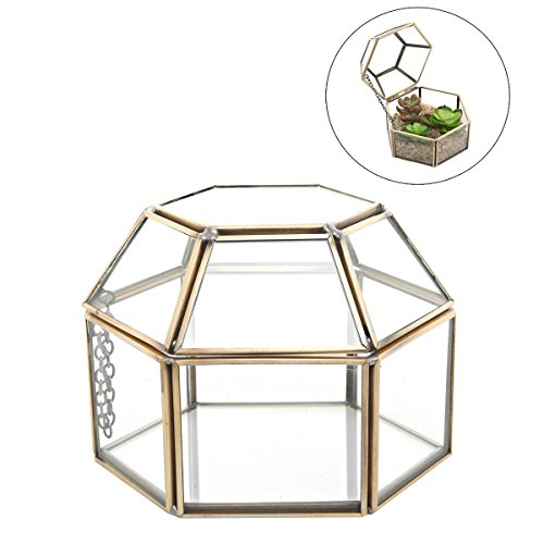 4.75 inch Faceted Hexagonal Clear Glass & Brass Metal Hinged Top Lid Plant Terrarium Box / Tabletop Display Case