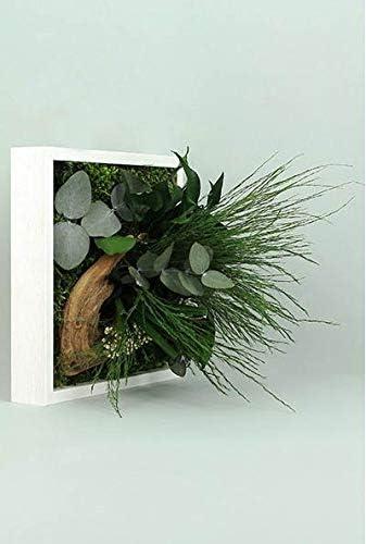 FLOWERBOX Tableau v/ég/étal Nature Mono avec Plantes stabilis/ées