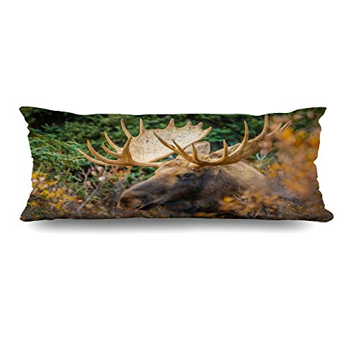 (Ahawoso Body Pillows Cover 20x54 Inches Mating Green America Moose Bull Denali Np Alaska Park Nature Antler Autumn Big Bush Conifers Decorative Cushion Case Home Decor)