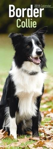 [FREE] Border Collie Slim Calendar 2018 P.D.F
