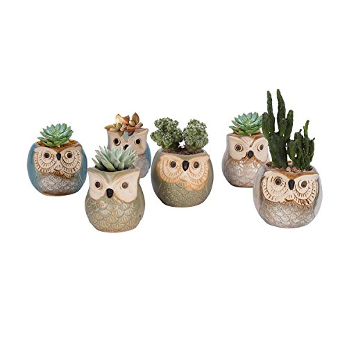 Vencer Mother s Day Gift Mini Ceramic Cute Owl Flower Pots,Office Desktop Potted Stand,Home Office Decor Accent,Ideal for Small Succulent,Set of 6,VF-053