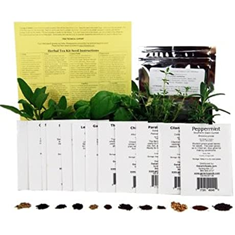 Medicinal Herb Seed Assortment Non GMO Healing Herb Seeds Burdock Cayenne Yarrow Chamomile Hyssop Echinacea More