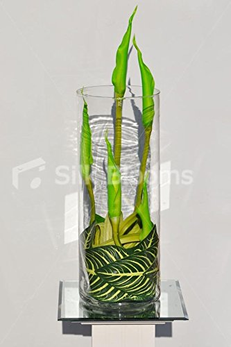 Green Goddess Calla Lily - Artificial Green Goddess Calla Lilies and Leaves Floral Terrarium Display