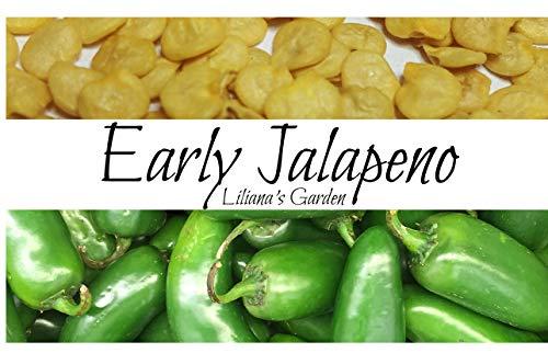 Jalapeno Seeds - Early Jalapeno - Fastest Growing Jalapeno - Heirloom - Liliana's Garden