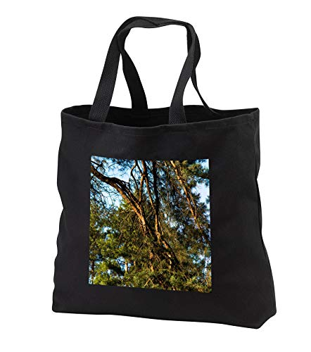 Alexis Photography - Nature Plants Pines - Mix of brown branches and green needles of an old pine tree in spring - Tote Bags - Black Tote Bag JUMBO 20w x 15h x 5d (tb_290557_3)