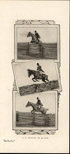 (Horse Leaping Fences Quaker Riding Stone Walls 1904 antique historic print )