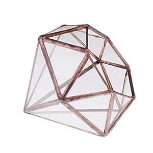 monkeyjack vertebral cristal terrario de mesa Aire suculentas maceta caja