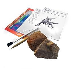 American Educational Vertebrate Fossil Dig Set
