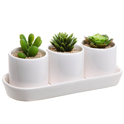 Ceramic Contemporary Succulent Display Draining