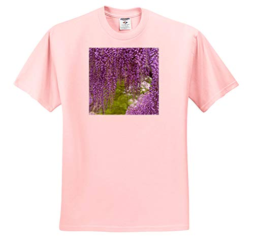 (3dRose Danita Delimont - Gardens - Japanese Wisteria. - Adult Light-Pink-T-Shirt Medium (ts_314999_35))
