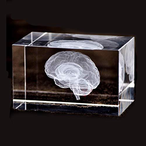 [해외]3D 인간의 두뇌 해부학 모델 문 진 (레이저 에칭) 크리스탈 유리 큐브 과학 선물 (포함 되지 않은 LED 베이스) (3.1 x2x2 인치) / 3D Human Brain Anatomical Model Paperweight(Laser Etched) in Crystal Glass Cube Science Gift (No Included LED...