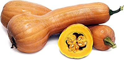 David's Garden Seeds Squash Winter Tahitian Melon DGS265 (Orange) 25 Organic Seeds