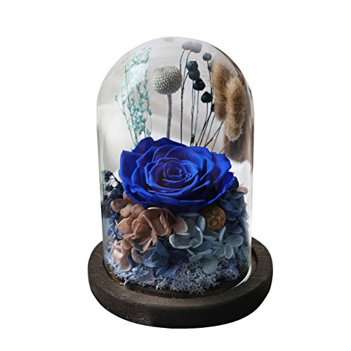Amoleya 4.9 Inch Handmade Preserved Rose Enchanted Rose that Lasts in Glass Dome,Navy ()