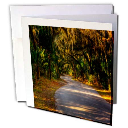 3dRose Mike Swindle Photography - Landscapes - Road Though The Shade Trees - 12 Greeting Cards with envelopes (gc_302574_2)
