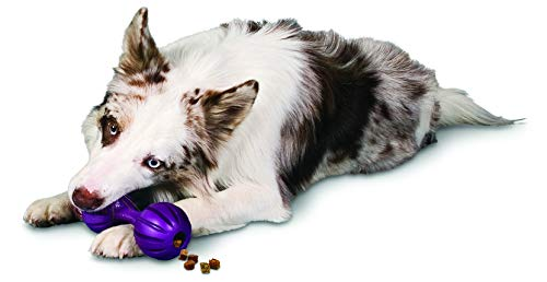 - PetSafe Busy Buddy Waggle Dog Toy, Medium/Large
