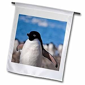 Danita Delimont - Penguins - Adelie Penguin on the beach, Devil Island, Antarctica-AN01 KSU0167 - Keren Su - 18 x 27 inch Garden Flag (fl_74272_2)
