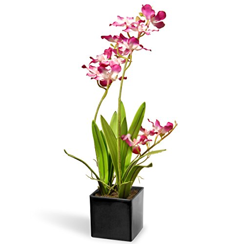 (National Tree 16 Inch Purple Orchid Flowers with Black Square Ceramic Base (NF36-5242S-1))