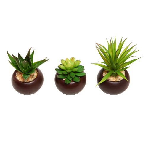 Potted Artificial Mini Succulent Plants, Set of 3