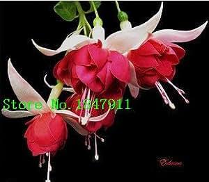 Gran venta fucsia envío libre, semillas de color fucsia, semillas de flores fucsias - 100pcs