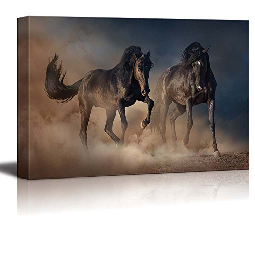 Two Black Stallion Horse Run in Desert Dust Against Sunset Sky Wall Decor ation