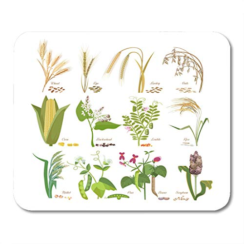 Emvency Mouse Pads Cereals and Legumes Grain Plants with Leaves Flowers Seeds Wheat Rye Barley Oats Corn Millet Sorghum Mouse Pad 9.5
