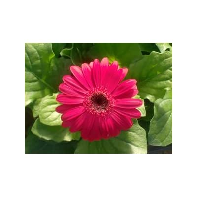 border floral 12-894