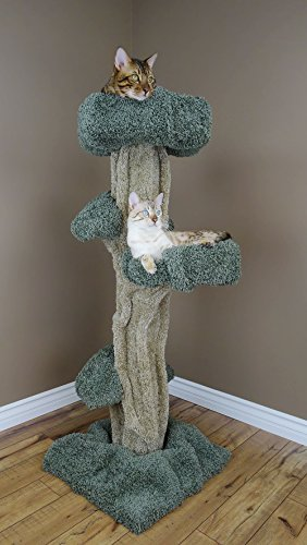 New Cat Condos Premier Large Cat Play Tree 41JxC2Bhi1L