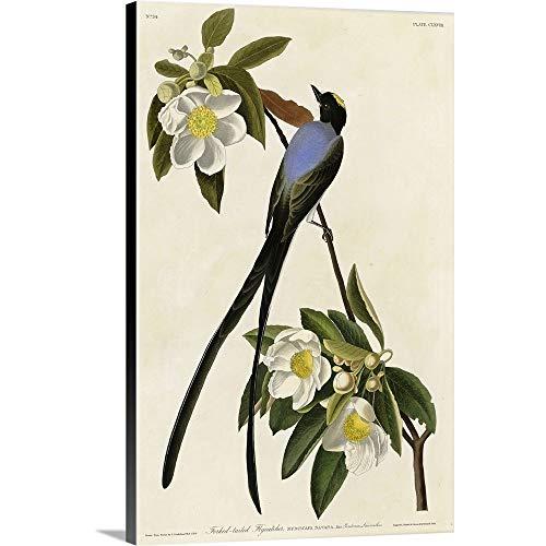 James John Fork Audubon (John James (1785-1851) Audubon Premium Thick-Wrap Canvas Wall Art Print entitled Fork Tailed Flycatcher 16