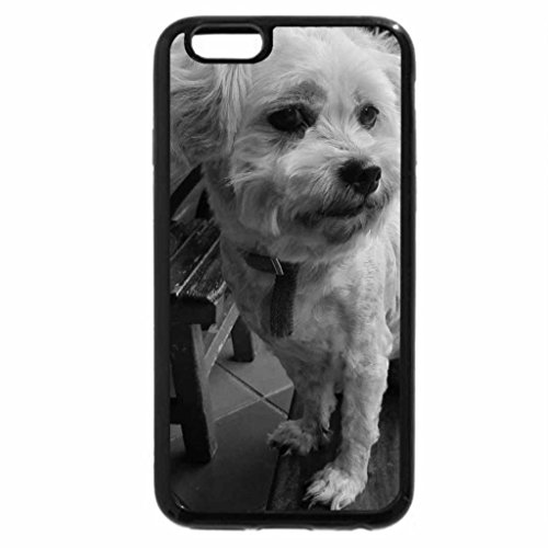 iPhone 6S Case, iPhone 6 Case (Black & White) - Dog posturing for the camera