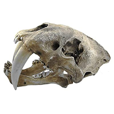 Gmasking Resin Smilodon Saber Tooth Tiger 1:1 Skull Replica(No Display Stand): Toys & Games
