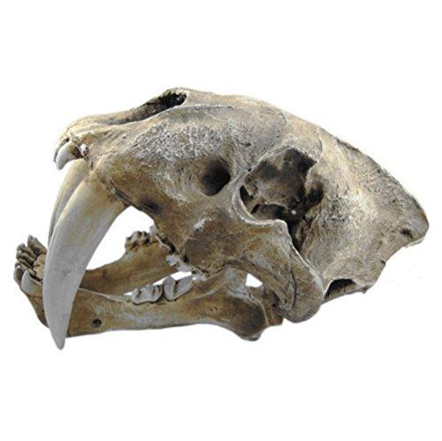 Gmasking Resin Smilodon Saber Tooth Tiger 1:1 Skull Replica(No Display Stand) by Gmasking (Image #2)