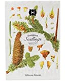 Evergreen Seedlings Paper Drawer Sachet by Hillhouse Naturals