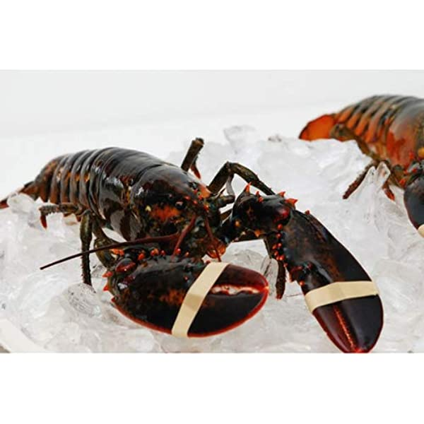 Live New England Lobster 1 25 Lb Avg 10 Lb Case Approximately 8 Lobsters Amazon Com Grocery Gourmet Food