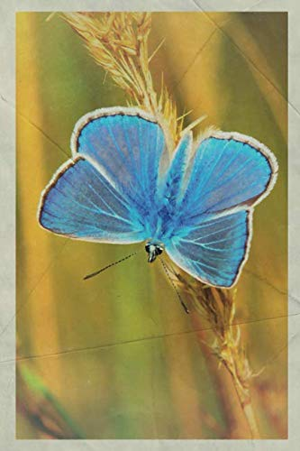 2020: Blue morpho butterfly Professional Planner Calendar Organizer Daily Weekly Monthly Vintage Retro Poster style for Cornflower Blue Butterflies -