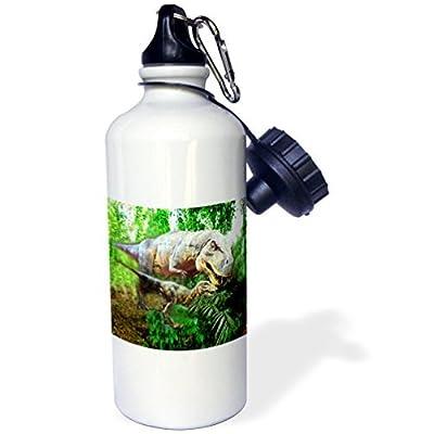 Dinosaures Sports Bouteille d'eau en acier inoxydable Bouteille d'eau pour femme homme enfants 400ml