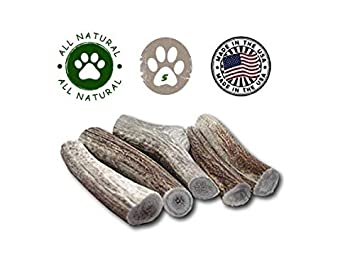 Top Dog Chews Premium Large Thick Elk Antler 5 Pack Dog Chew Treat Made in USA