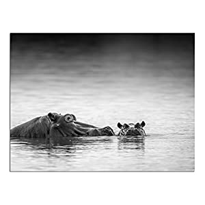 """JP London PAPXS1X705189 Solvent Free Poster Art Print Eye Level African Animal Safari Hippo Water Ready to Frame Wall 8"""" by 10"""""""