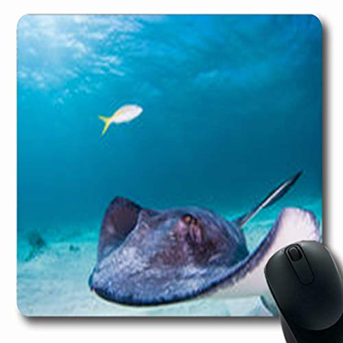 Pandarllin Mousepads Explore Southern Stingray Glides Through British Shallow Blue Wildlife Nature Cayman Oblong Shape 7.9 x 9.5 Inches Oblong Gaming Mouse Pad Non-Slip Rubber Mat (Stingray Mouse Pad)