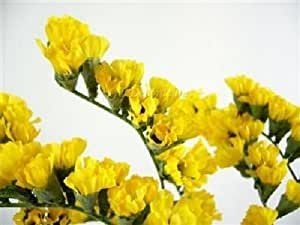 50+ YELLOW STATICE FLOWER SEEDS / ANNUAL / GREAT GIFT