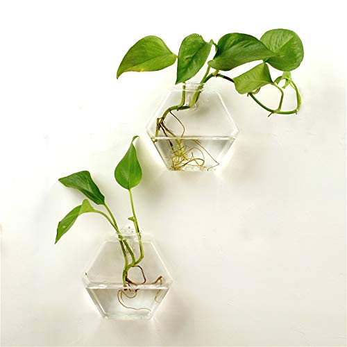 AWEVILIA Wall Hanging Plants Planter Terrariums Creative Fashion Glass Hexagon Shape Vase Home Decor Wall Plants Set of Two
