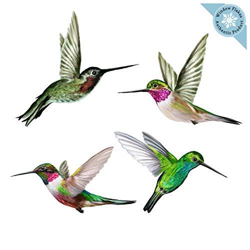 Bird Clings - 9