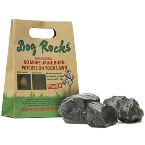Dog Rocks – All Natural Grass Burn Solution for Dogs Prevents Lawn Urine Stains - 600 Gram Box (1 Pack)