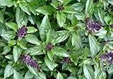 100 Cinnamon Basil Seeds
