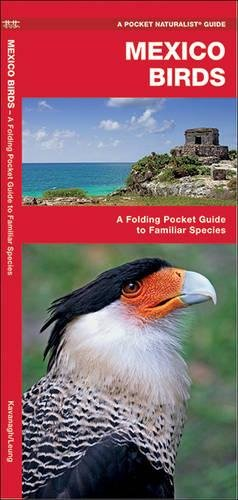 mexico-birds-a-folding-pocket-guide-to-familiar-species-a-pocket-naturalist-guide