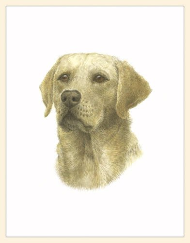 Fiddler's Elbow Yellow Lab Blank Box Note Cards