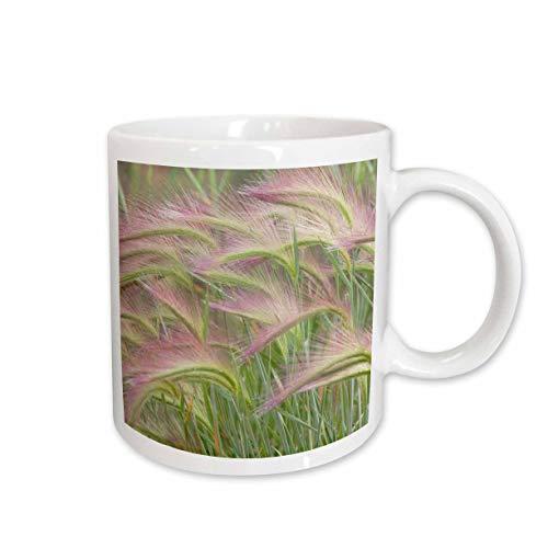 3dRose Danita Delimont - Natural Patterns - Canada, Yukon. Foxtail grass close-up. - 11oz Mug -