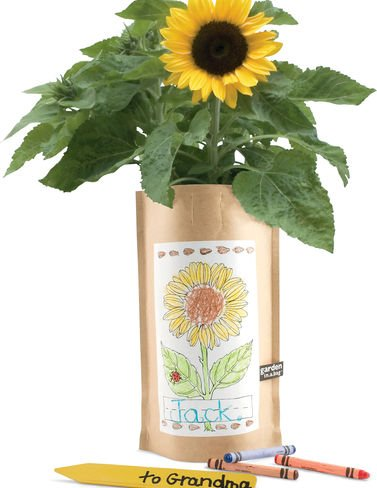 Kit Sunflower (Sunflower Garden in a Bag Kids8217; Kit)