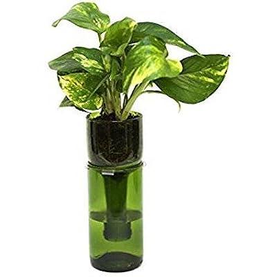 Hydroponic Garden In Wine Bottle/Indoor Herb Garden/Wine Gift Bottle Planter/Herbs/Indoor Planter/Wine Bottle Decor/Hydroponics (SET OF 2) : Garden & Outdoor