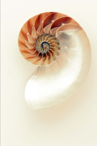 A Simple and Lovely Nautilus Seashell Journal: 150 Page Lined (Seashell Journal)